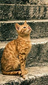 Fotos Katze Sitzt Stiege Orange rot ein Tier
