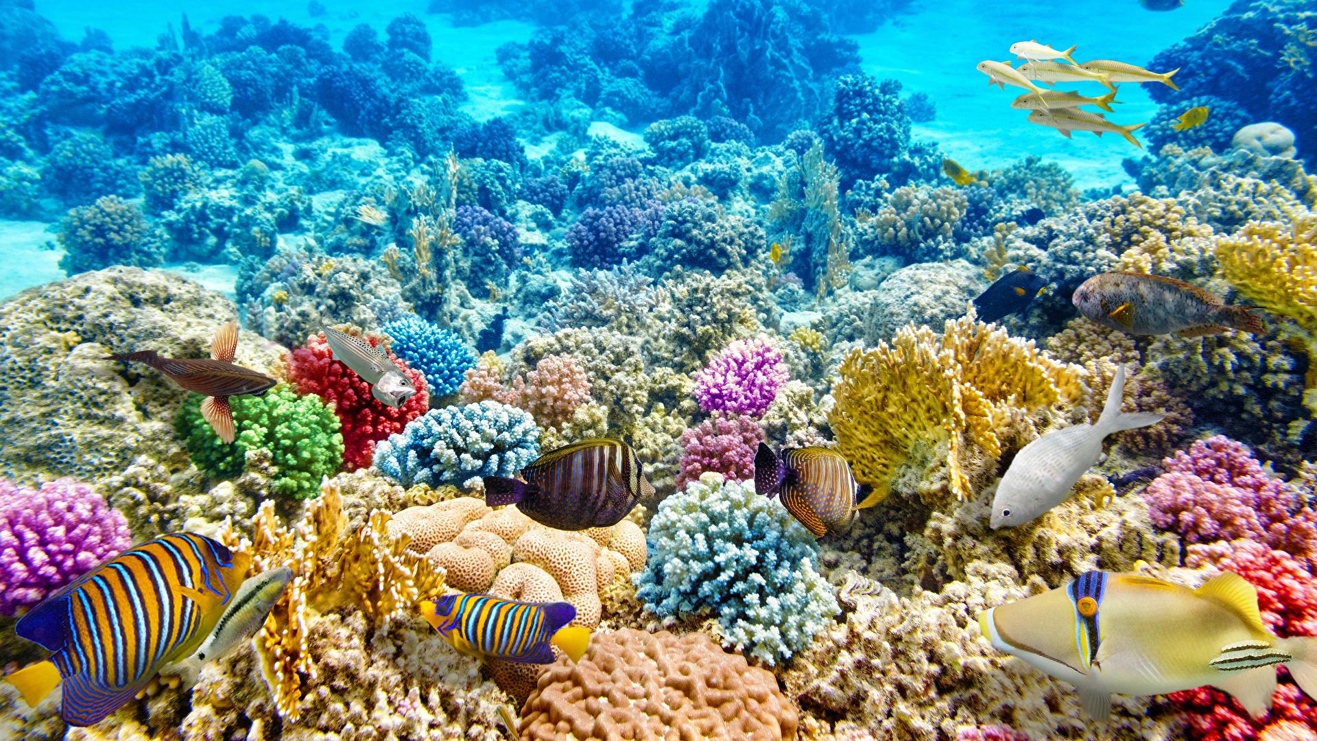 Fondos De Pantalla 1920x1080 Mundo Submarino Corales Peces