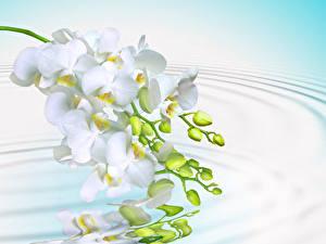 Bilder Orchideen Wasser Weiß Spiegelung Spiegelbild Kreis Blüte
