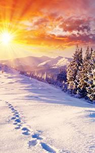 Bilder Sonnenaufgänge und Sonnenuntergänge Winter Landschaftsfotografie Schnee Fichten Lichtstrahl Sonne