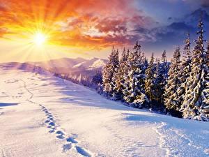 Bilder Sonnenaufgänge und Sonnenuntergänge Winter Landschaftsfotografie Schnee Fichten Lichtstrahl Sonne Natur