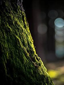 Fotos Großansicht Laubmoose Natur