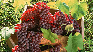 Hintergrundbilder Weintraube Hautnah Blattwerk das Essen