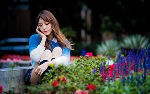 Hintergrundbilder Asiatische Park Niedlich Bokeh Braunhaarige Sitzen Mädchens