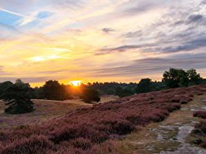 Bilder Sonnenaufgänge und Sonnenuntergänge Himmel Gras Sonne