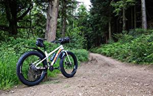 Fotos Wälder Fahrrad Bäume Weg Natur
