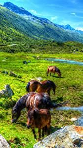 Fotos Österreich Gebirge Grünland Hauspferd Teich Landschaftsfotografie Paznauntal Tiere