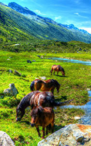 Fotos Österreich Berg Grünland Pferd Teich Landschaftsfotografie Paznauntal Natur Tiere