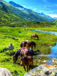 Fotos Österreich Berg Grünland Pferd Teich Landschaftsfotografie Paznauntal Tiere
