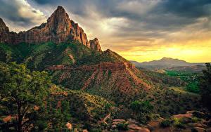 Bilder Vereinigte Staaten Zion-Nationalpark Park Felsen Ast Strauch Natur