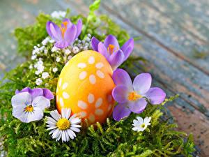 Fotos Feiertage Ostern Krokusse Kamillen Garten-Stiefmütterchen Ei Blumen