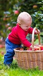 Hintergrundbilder Äpfel Junge Weidenkorb Kinder