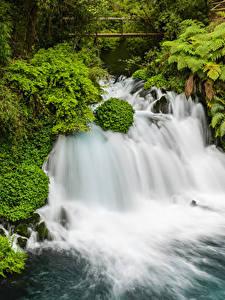 Bilder Chile Park Wasserfall Strauch Conguillio National Park