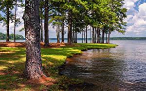 Hintergrundbilder Vereinigte Staaten Park See Florida Bäume Anderson Park West Point Lake Natur