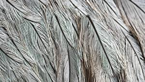 Hintergrundbilder Textur Federn Hautnah