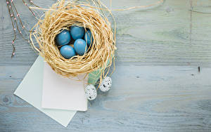 Fotos Ostern Ei Nest Blatt Papier