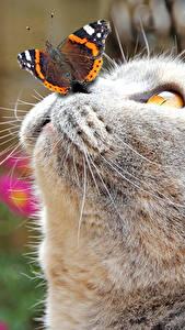Fotos Hauskatze Schmetterling Schnauze Grau Nase Kopf ein Tier
