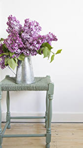 Fotos Sträuße Syringa Kannen Blüte