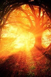 Hintergrundbilder Morgen Sonnenaufgänge und Sonnenuntergänge Wälder Bäume Lichtstrahl Natur