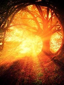 Hintergrundbilder Morgen Sonnenaufgänge und Sonnenuntergänge Wälder Bäume Lichtstrahl