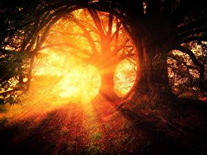 Picture Morning Sunrises and sunsets Forests Trees Rays of light Nature