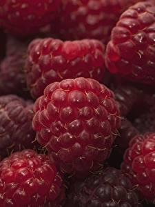Fotos Himbeeren Hautnah Makrofotografie das Essen