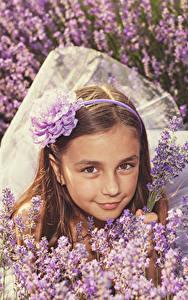 Fotos Lavendel Kleine Mädchen Starren Braunhaarige Kinder