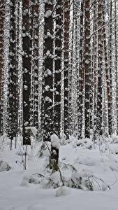 Hintergrundbilder Winter Wald Schnee Bäume Baumstamm Natur
