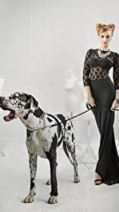 Fonds d'écran Chien Dogue allemand Les robes Animaux