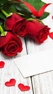Bilder Rosen Bretter Rot Herz Band Blumen