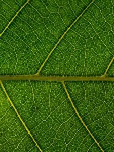 Bilder Textur Nahaufnahme Blatt Natur