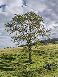 Hintergrundbilder Vereinigtes Königreich Grünland Stein Bäume Wolke Yorkshire