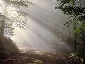 Hintergrundbilder Morgen Wälder Wege Nebel Bäume Lichtstrahl