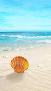 Bilder Meer Wasserwelle Muscheln Strand Sand Stern-Dekoration
