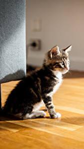 Bilder Katze Kätzchen Tiere