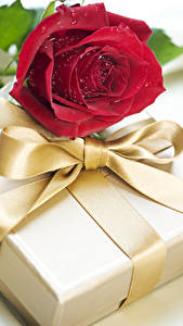 Hintergrundbilder Feiertage Rose Dunkelrote Geschenke Schleife Blüte