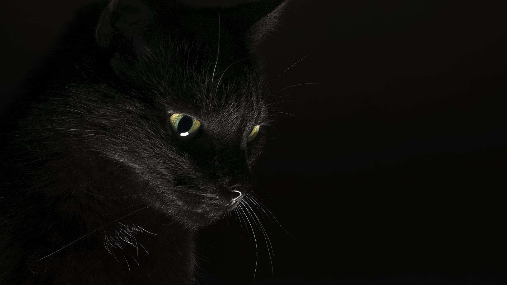 壁紙 19x1080 飼い猫 黑 黒色背景 動物 ダウンロード 写真