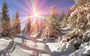 Fotos Ukraine Jahreszeiten Winter Transkarpatien Schnee Fichten Sonne Natur