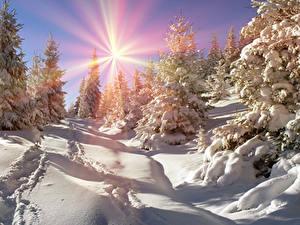 Fotos Ukraine Jahreszeiten Winter Transkarpatien Schnee Fichten Sonne