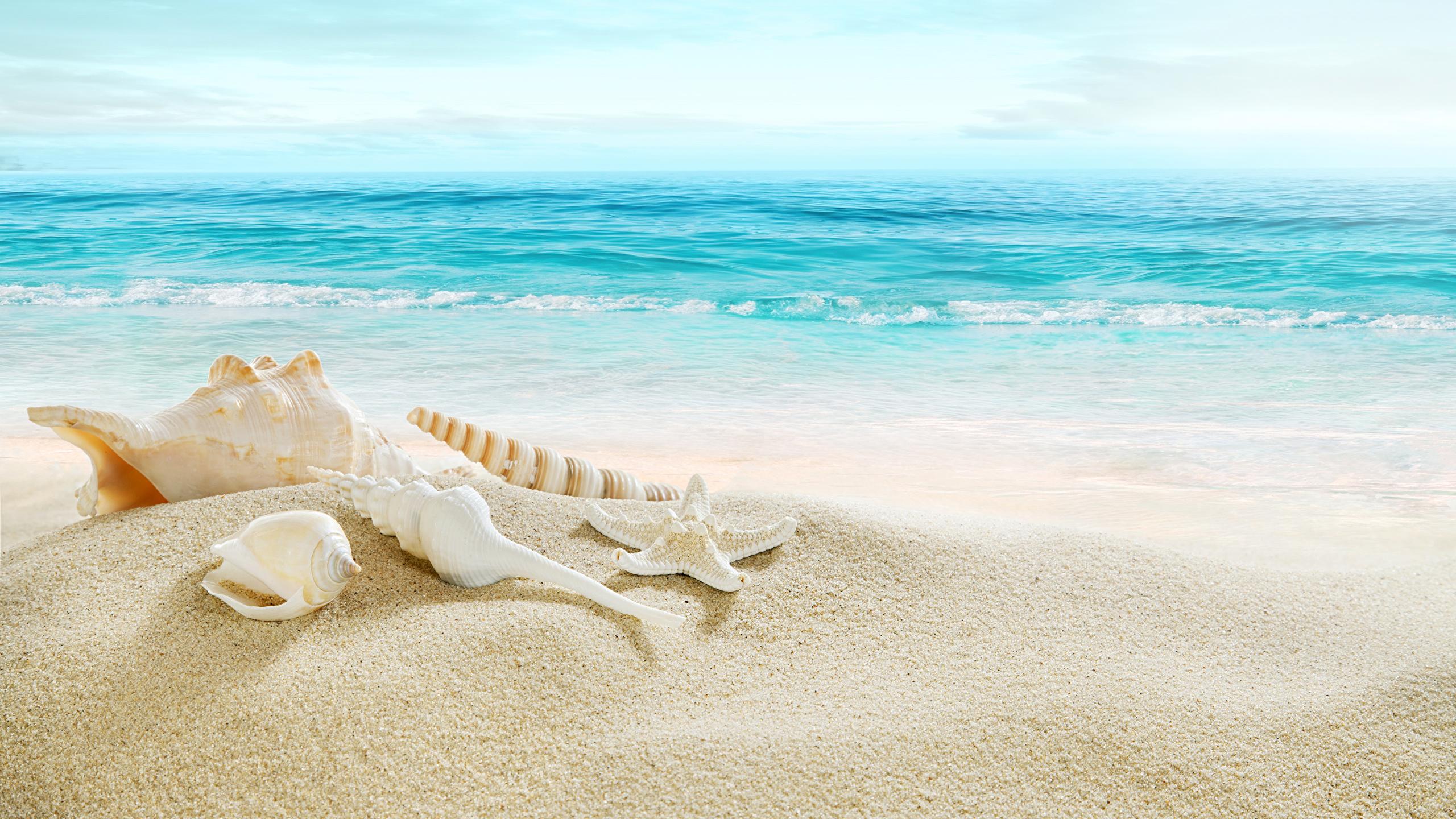 壁紙 2560x1440 海 海岸 貝殻 ビーチ 自然 ダウンロード 写真