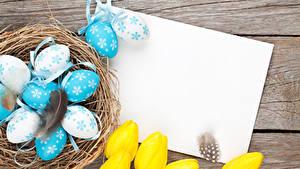 Bilder Feiertage Ostern Tulpen Federn Ei Vorlage Grußkarte Nest