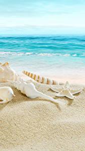 Bilder Meer Küste Muscheln Strand
