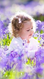 Bilder Acker Lavendel Kleine Mädchen kind