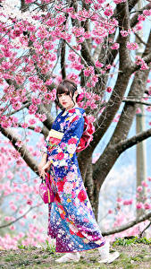 Fotos Asiaten Blühende Bäume Kimono Pose Starren Japanische Kirschblüte junge Frauen