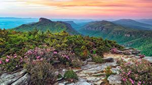 Hintergrundbilder USA Park Gebirge Landschaftsfotografie Strauch Roan Mountain Rhododendron Gardens Natur