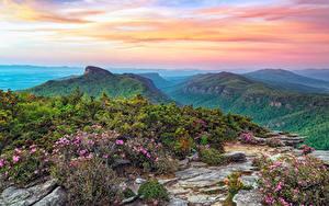Hintergrundbilder USA Park Gebirge Landschaftsfotografie Strauch Roan Mountain Rhododendron Gardens