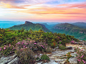 Pictures USA Parks Mountains Landscape photography Shrubs Roan Mountain Rhododendron Gardens Nature