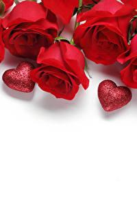 Hintergrundbilder Rosen Valentinstag Rot Herz Weißer hintergrund Vorlage Grußkarte