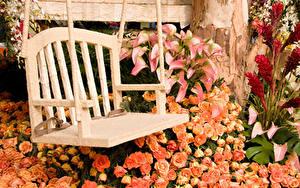 Fotos Rosen Calla palustris Bank (Möbel)