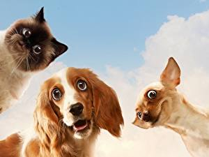 Image Dogs Cats Funny Glance Animals Humor